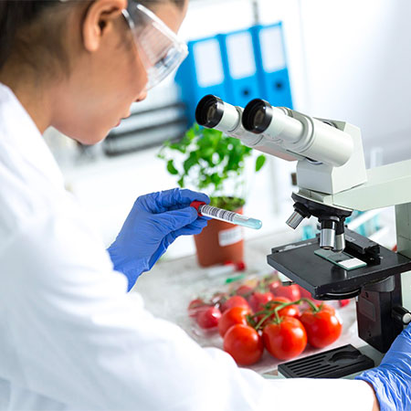 Human holding test tube near microscope with tomatoes in background